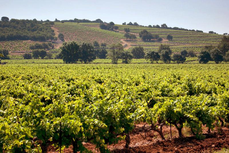 Винодельческое поместье рядом с Сан-Тропе, Франция.