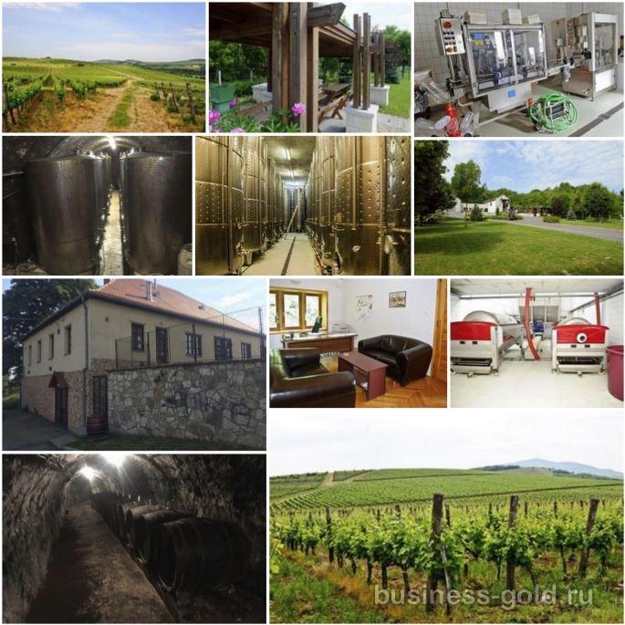 Винодельческое предприятие в Венгрии, в знаменитом винодельческом регионе Токай, Токайское вино – общемировой бренд.